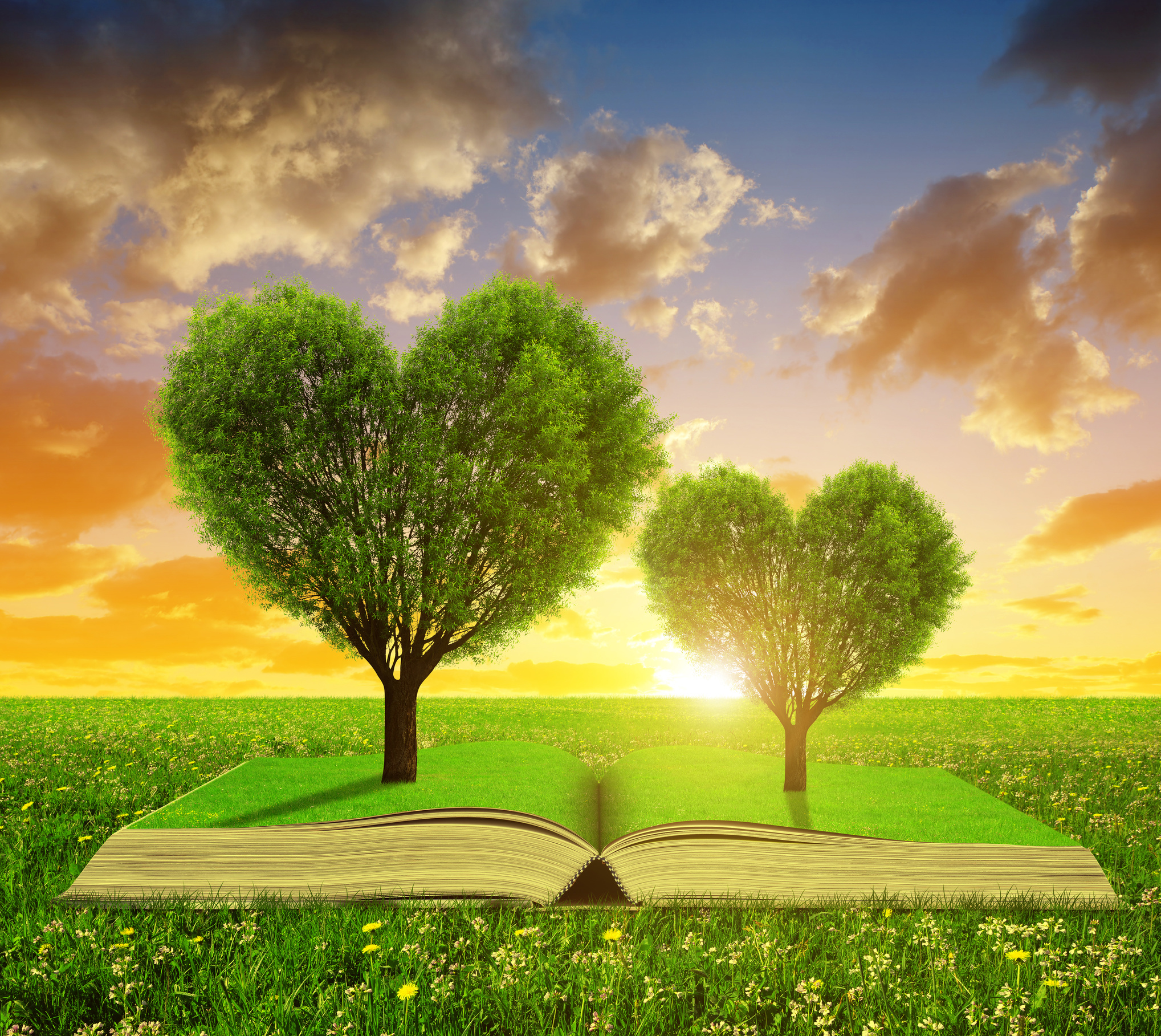 Book with a trees in the shape of heart on meadow at sunset.